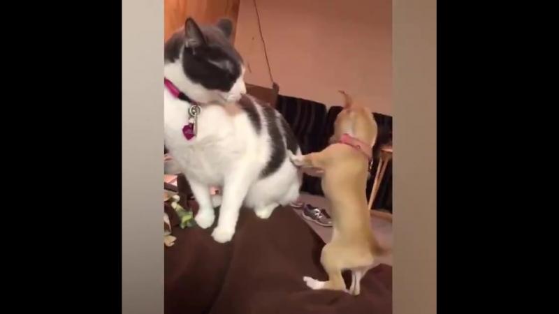 Кошки vs Собаки   Сбой в матрице :)