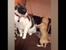 Кошки vs Собаки | Сбой в матрице :)