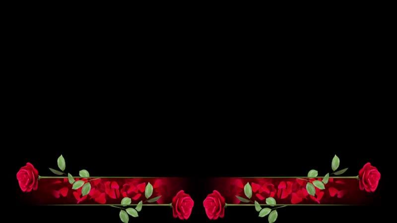 Футаж Поздравляем титры с розами