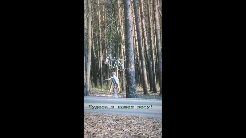 Теперь я видел все в лесу на Светотехстрое...