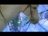 клип Натали - Снежная роза HD 720 1996 год ретро _ музыка 90-х HDTVRip 1080p 60-