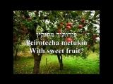 Ilan-Tree-Motty Steinmetz-Hebrew+English Lyrics (PICTURE-TEXT ONLY)-אילן-מוטי שטיינמץ