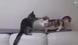 ЭКСКЛЮЗИВ! Русские приколы с котами до слез Смешные коты под музыку Смешные кошки МатроскинТВ