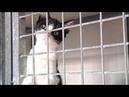 SPA abandon des animaux en forte hausse