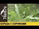 Борьба с сорняками - 7 дач