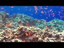 Релакс видео Океан