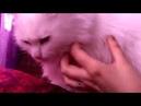 УТРО ЧЕЛОВЕКА, У КОТОРОГО ДВЕ КОШКИ | Алиса и Атос Cat's relax