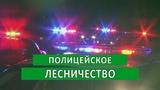 ПОЛИЦЕЙСКОЕ ЛЕСНИЧЕСТВО Аналитика Юга России