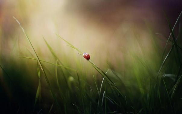 любовь, в отличии от влюбленности, является ясновидением: вы видите человека таким, каков он есть, со всеми его талантами и искажениями, и он помещается именно таким в вашем сердце. любить — не значит всегда испытывать восхищение, нежность, радость