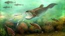 Происхождение и эволюция рыб