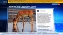 Новости на Россия 24 • Глава Минприроды позвал Ди Каприо в Россию спасать сайгаков