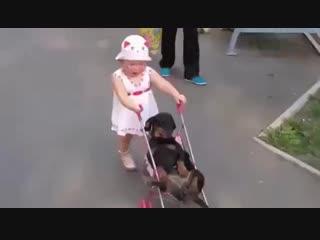 Приехала внучка: кот сразу притворился мёртвым, а собака не успела :)
