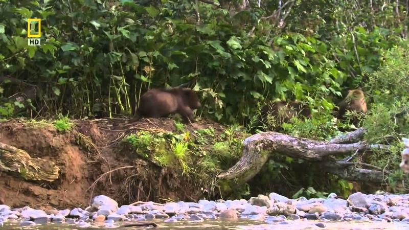 Дикая природа России 2 серия Камчатка HD