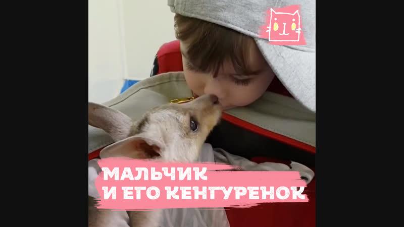Дружба мальчика и кенгуренка