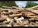Промышленники рубили лес в заказнике в Тогучинском районе ради добычи золота