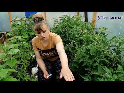 БОРНАЯ КИСЛОТА увеличивает урожайность томатов, земляники, картофеля, свеклы и других растений