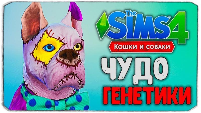 ЧУДО ГЕНЕТИКИ, ЧТО НЕ ТАК С ПЕСИКОМ?! - The Sims 4 Кошки и Собаки