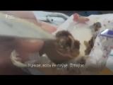 У цукерках «Алёнка» знайшлі жывых чарвякоў!