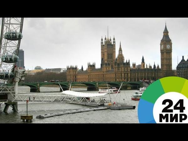 Английские экологи пытаются вернуть белуху из Темзы в море - МИР 24
