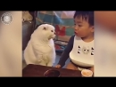 Baby Cats 🔴 Funny and Cute Baby Cat Videos Compilation