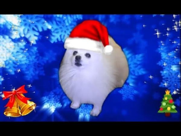 Jingle Borks