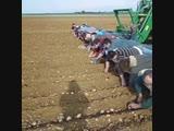 На Белорусских полях - Заметки строителя