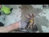Пожарный спасает утонувшего котёнка _ firefighter brings drowned kitten