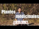 Les nouveaux mélanges de plantes médicinales Regenerescence - TI Jour 12 - regenere