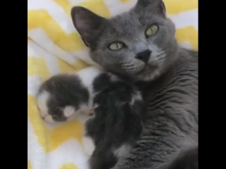 Tag your friend_wink___1_ So lovely_sparkling_heart_ From_ @foster_kittens ( 640 X 640 ).mp4