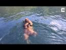 Медведица перевозит медвежат через реку