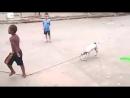 Dog plays along at rope skipping