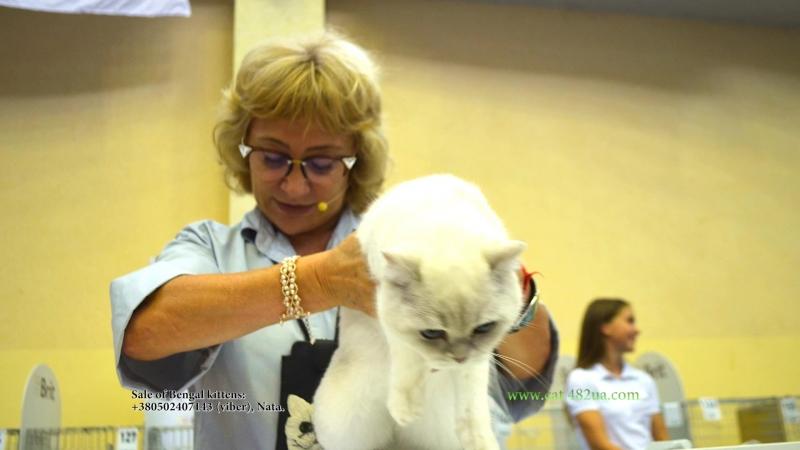 16092018, Выставка кошек, Харьков, Радмир Экспохолл, WCF, Слайд show