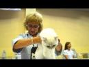 16092018 Выставка кошек Харьков Радмир Экспохолл WCF Слайд show
