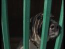 Жизнь столицы Пункт передержи бездомных животных проведет ярмарку-раздачу собак