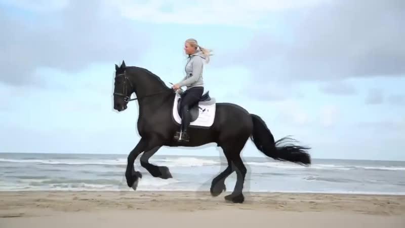 Лошади и Дельфины - Лучшие люди на свете!