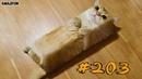 КОТЫ 2018 Смешные коты приколы с котами до слез под музыку – Смешные кошки – Funny Cats