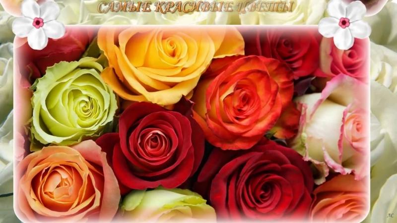 Самые Красивые Цветы для Вас Милые Женщины