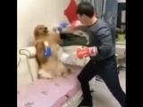 Тот момент в боксе, когда твоя собака защищается лучше тебя).