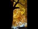 Кленовый лист Кленовый лист