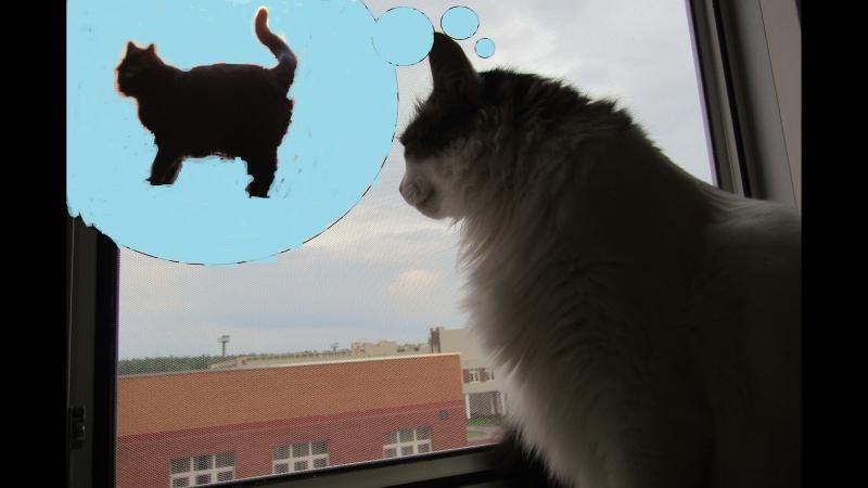 Две кошки и одна ♥любовь♥
