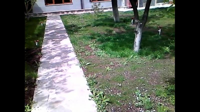 Бабочка-парусник во дворе частного дома в Ереване