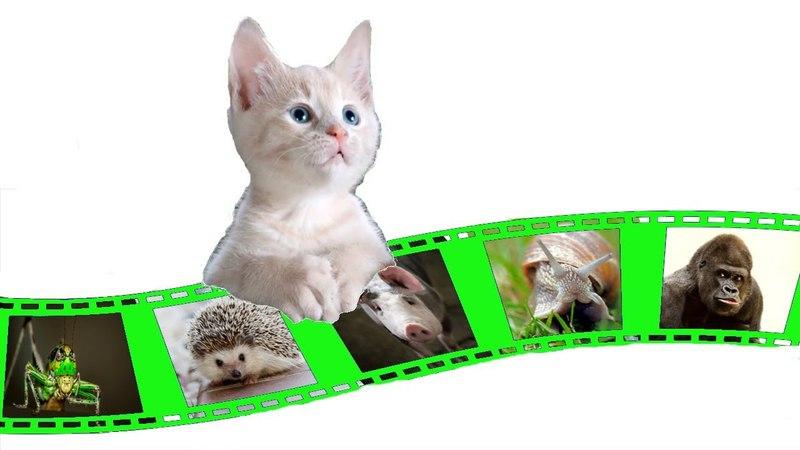 Видео для детей про котёнка и горилла,ёжик,поросёнок,улитка и кузнечик от Kids Club Nicky