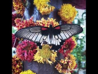 Парк бабочек dubai butterfly garden