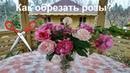 Как обрезать розы на зиму ✂️