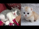 ♥Cute Cats and Kittens Doing Funny Things 2018♥ 1 - Funny Cat compilation