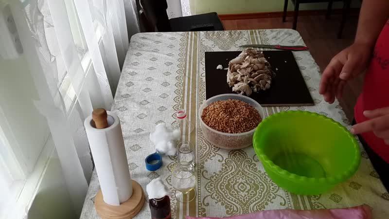 Как сделать зерновой мицелий вешенки дома!