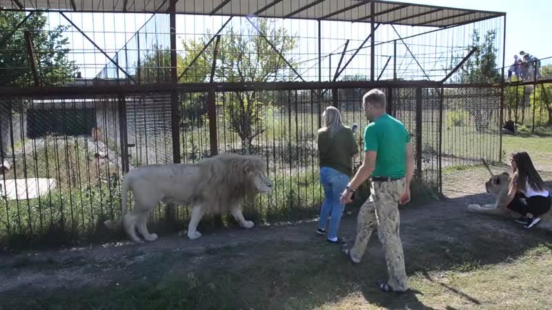 Льва Дейла хлопнули по попе , а львицу Клепу потянули за хвост