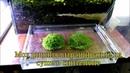 Выращивание мха риччи на суше в синтепоне/Cultivation of moss Ricci on land in synthepone