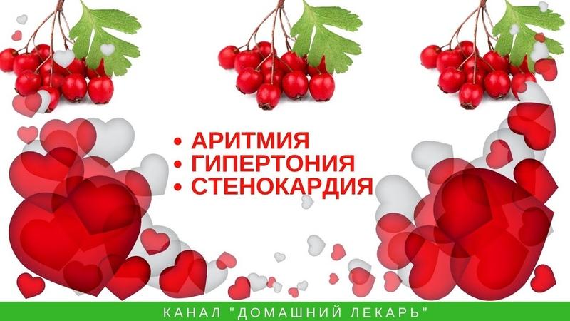 Боярышник - тоник для сердца - Домашний лекарь - выпуск №194