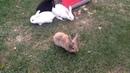 кролики это не только ценный мех но и море позитива